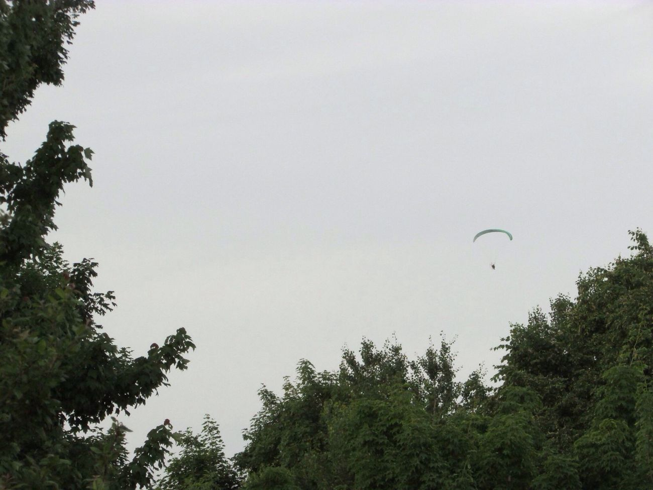 Green Three Sky Fly
