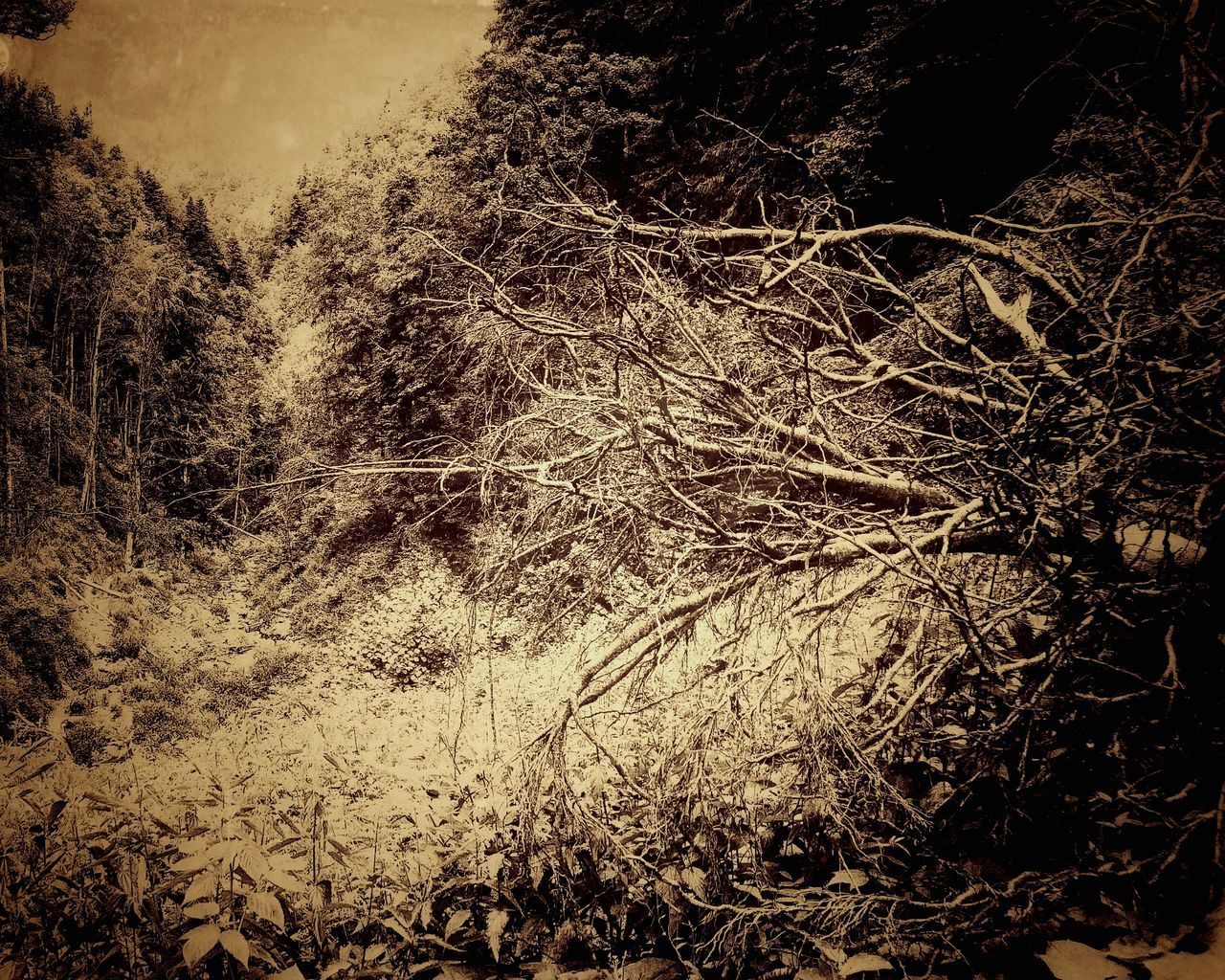 Abstract Backgrounds No People Close-up Day Mountain Fallen Tree Old Forgotten Sad High Contrast