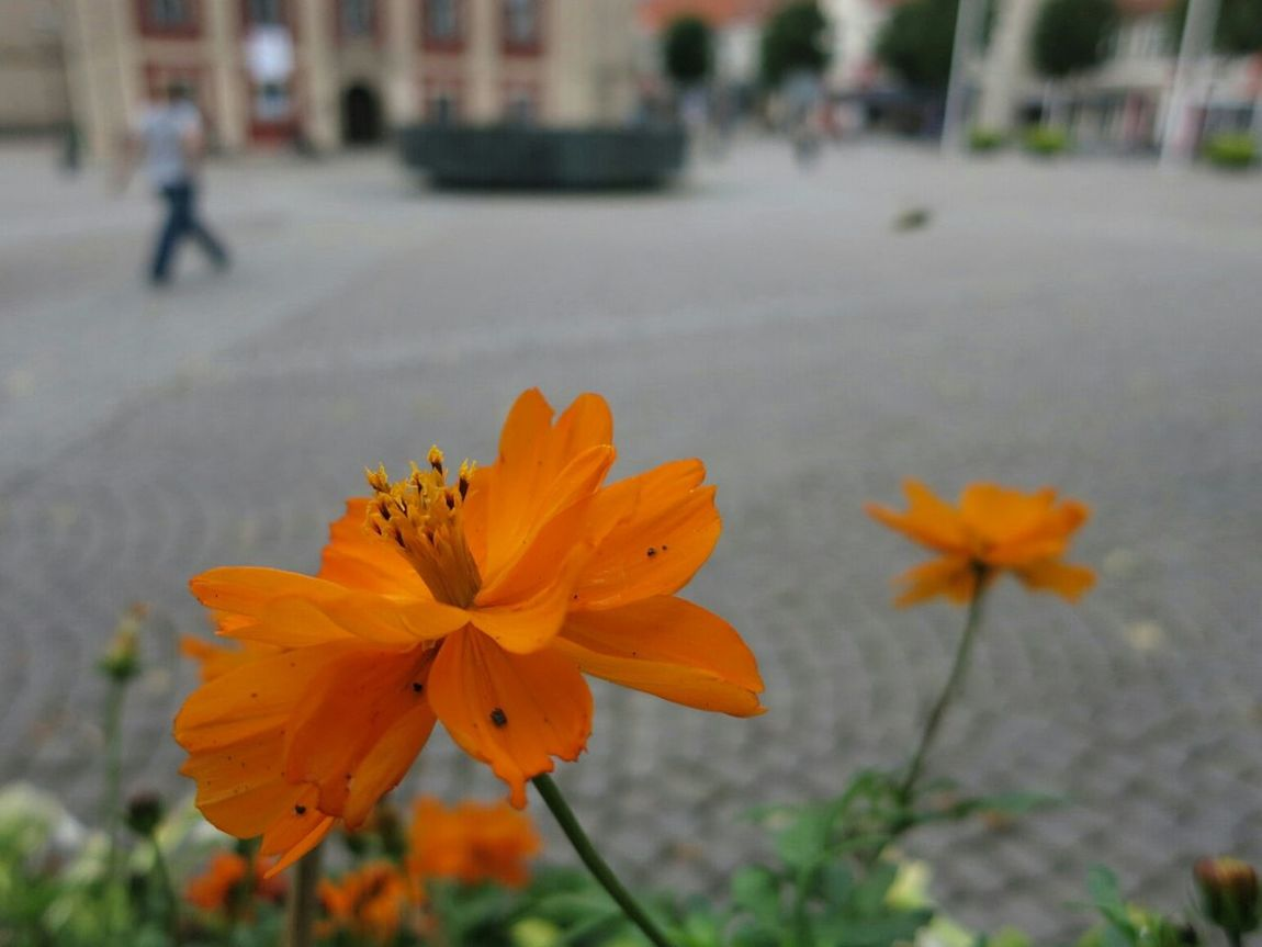 A nice Colour Splash with Orange at one of our Market Place s - Macro :-)