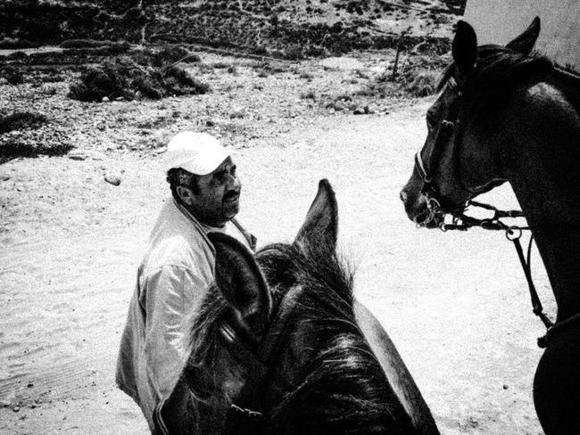 Horses' meeting !