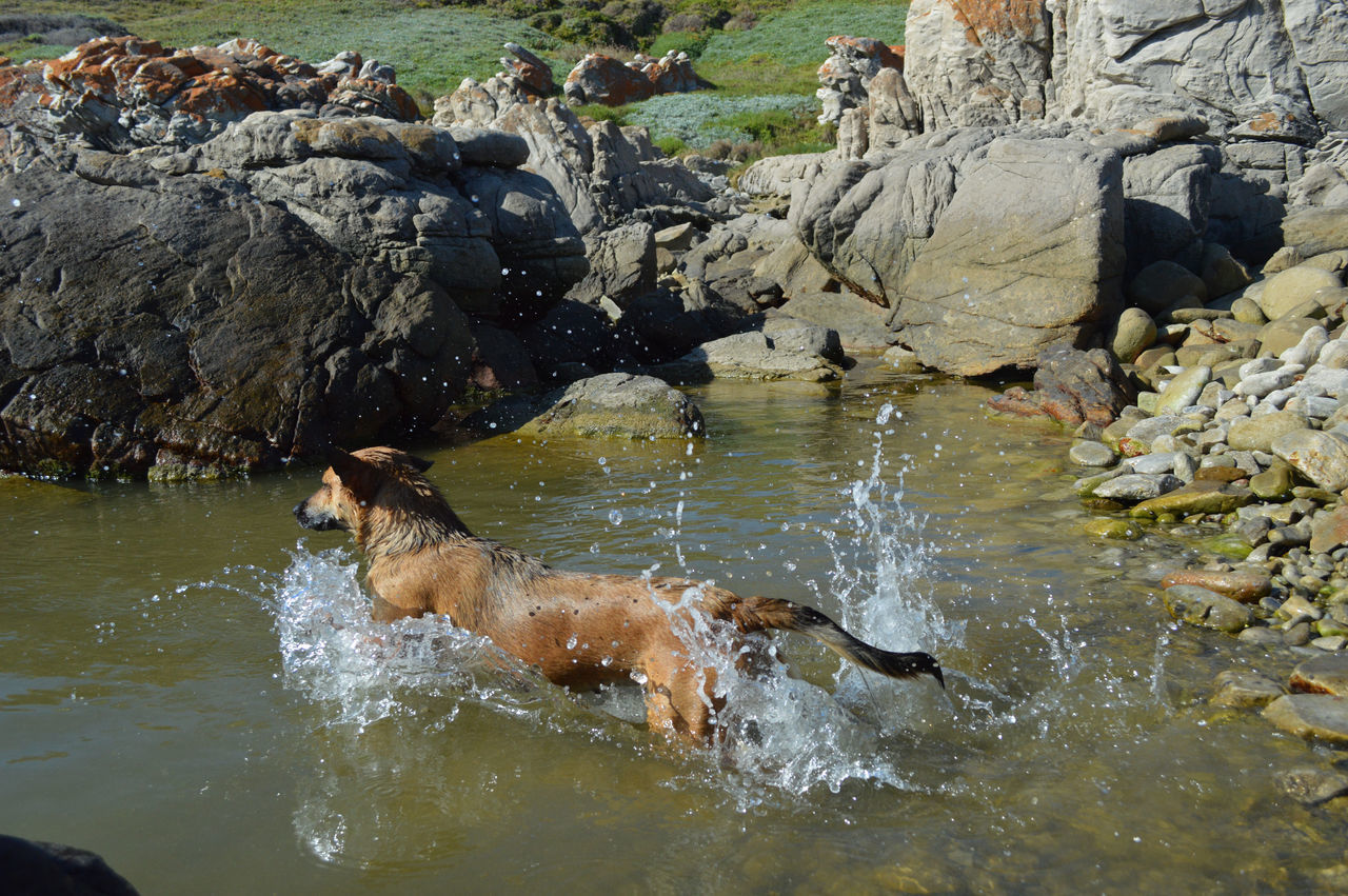 Beautiful the bravest dog we have! jumping into a rock pool for a stone! Dog Jumping Dog Playing Dog Swimming Sea Dog Animal Themes Animal Photography Outdoors Enjoying Life