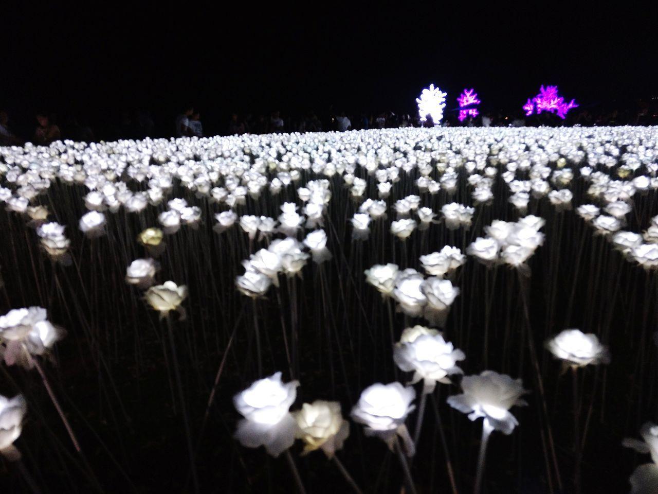 10,000 LED lights