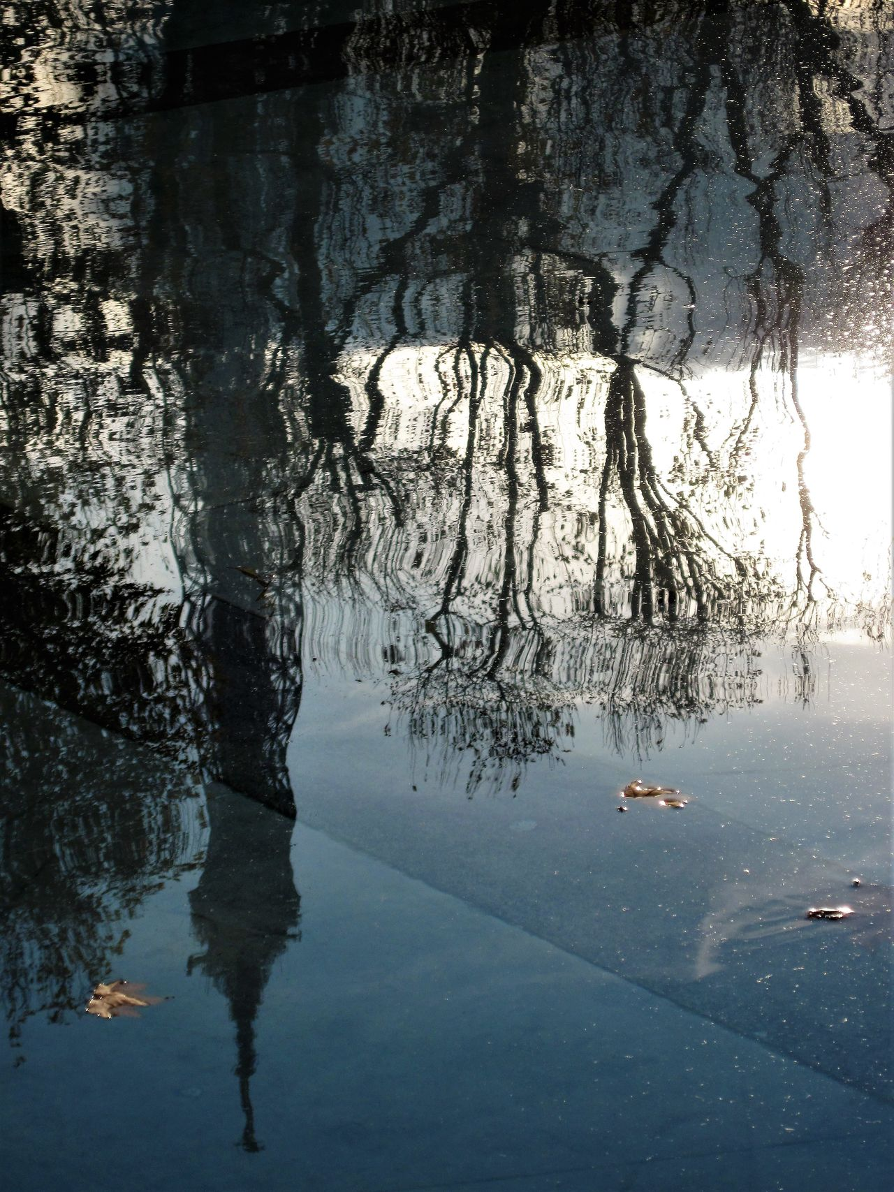 Beauty In Nature Day Eiffel Tower Nature No People Outdoors Reflection Tranquility Tree Water