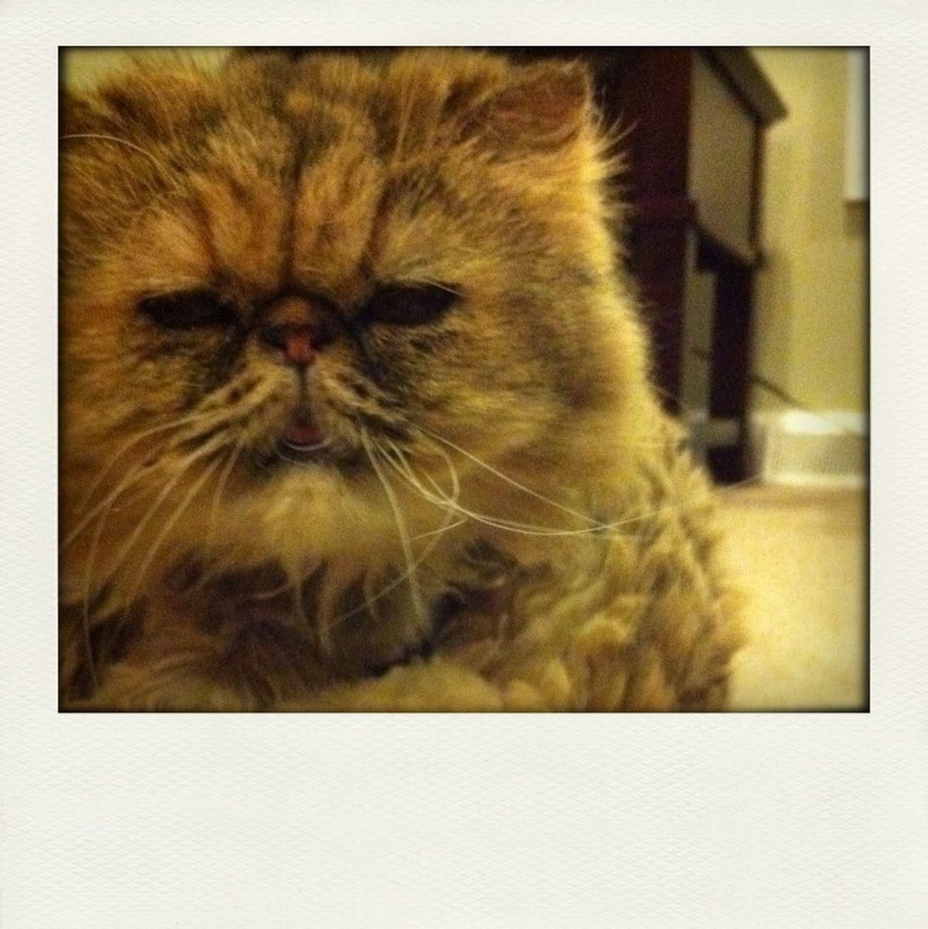 Wynter Cat