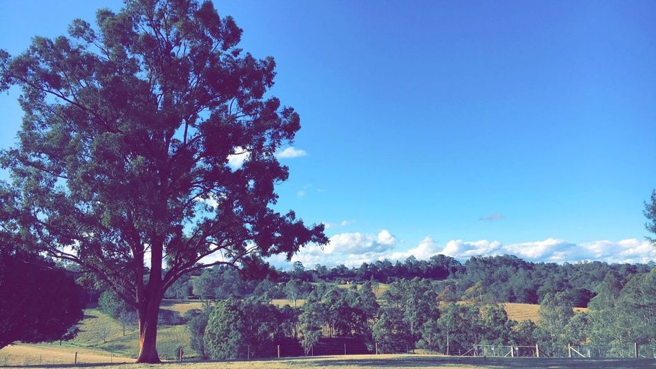 Home ❤️🇦🇺 Greenlifestyle The Hills