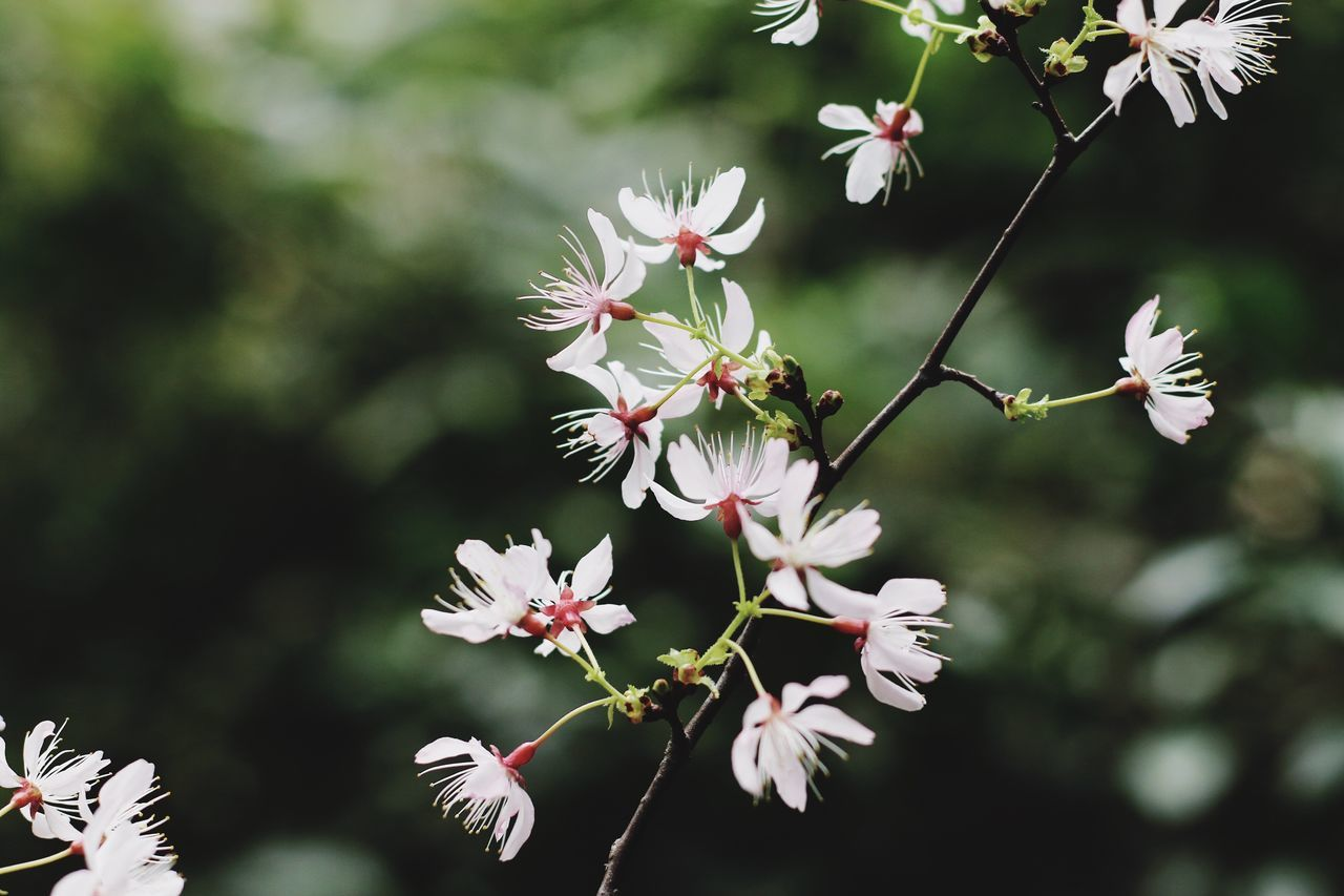 Sakura Flower Nature Growth Fragility Beauty In Nature Freshness Springtime Petal Close-up No People Blossom Outdoors Flower Head Plant Twig Blooming Day Plum Blossom Flowerporn EyeEmNewHere EyeEm Gallery Beautiful Nature From My Point Of View Spring