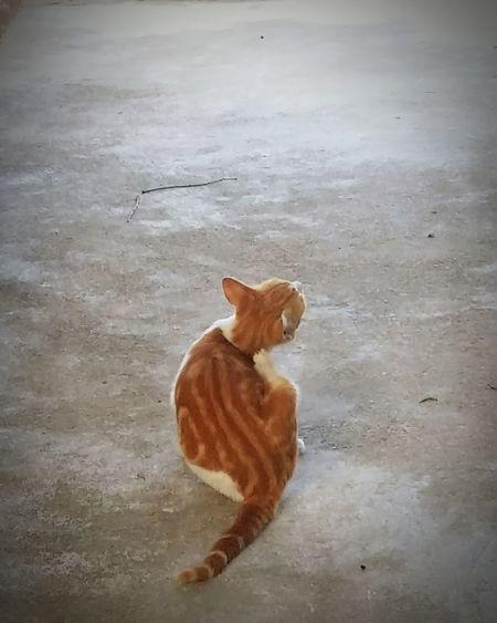 Pets Domestic Animals Day Nature Sunny Day 🌞 Cat Qute Animals Lovely Warm - China Zhuhai