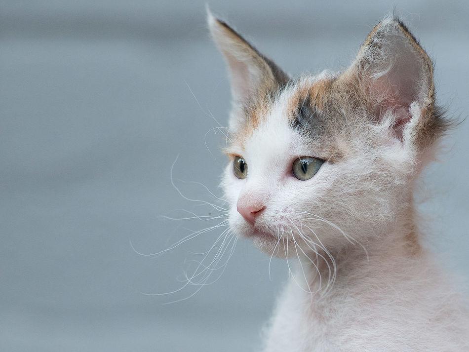 Beautiful stock photos of baby katzen, Animal Themes, Cat, Close-Up, Day