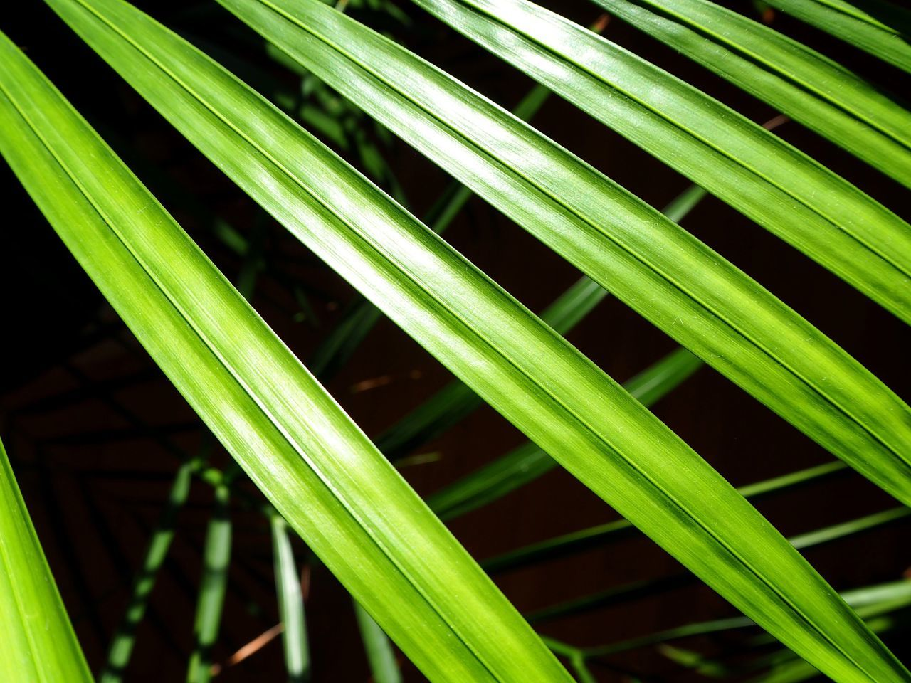 Plants Plant Leaf Green Closeup Close Up