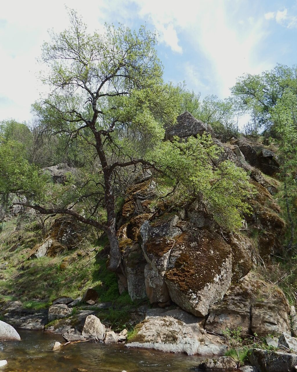 tree, sky, nature, rock - object, beauty in nature, day, tranquility, outdoors, no people, scenics, landscape, cloud - sky
