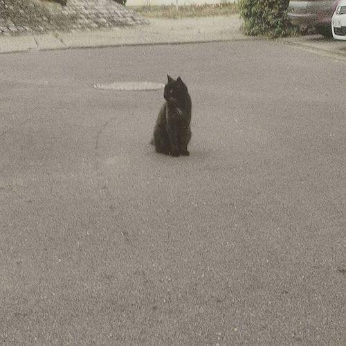 Ce genre de chat...tu peux tirer a la kalachnikov...lui il ne bougera pas non. Jmenbatlachatte