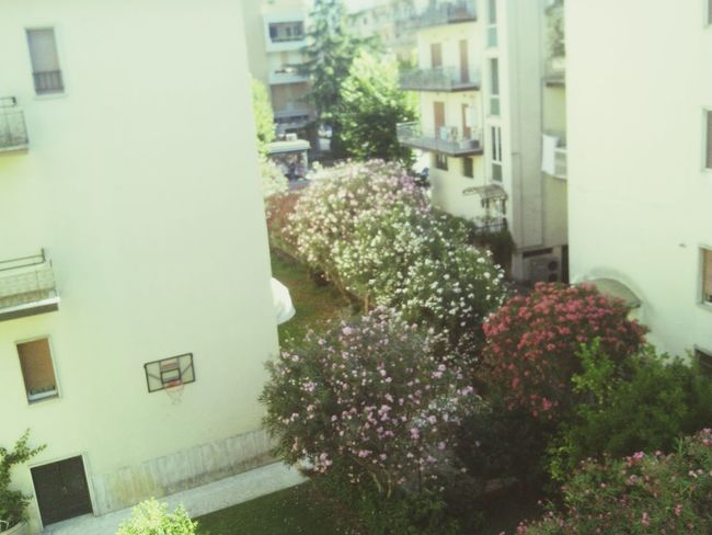 From My Doorstep My Morning View Italy Much Flowers Nice View