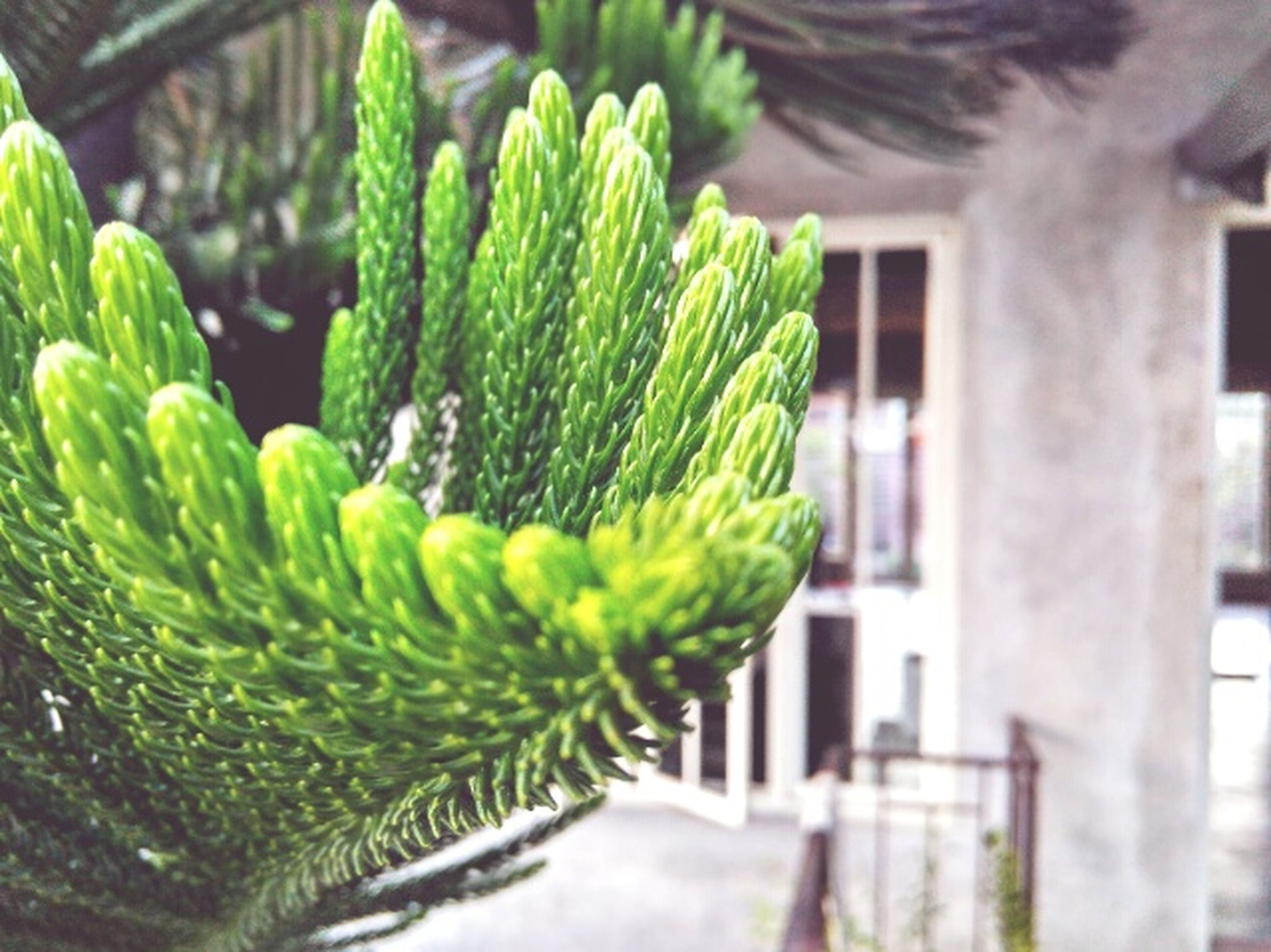 green color, growth, plant, building exterior, nature, no people, close-up, outdoors, day, freshness, architecture, beauty in nature