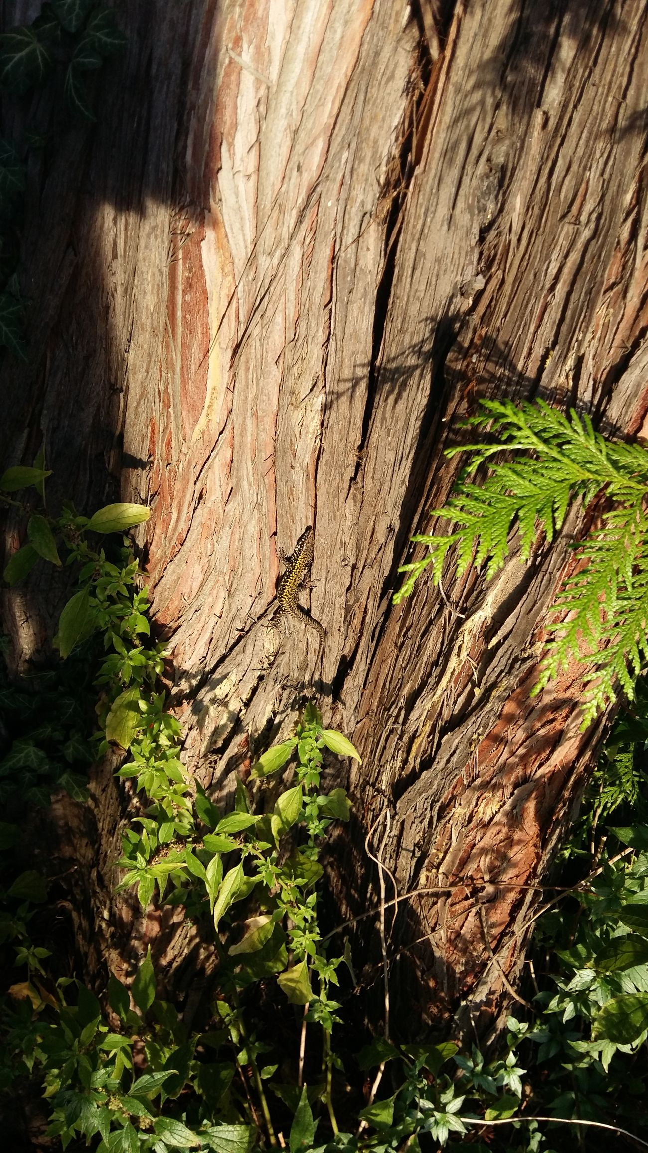 Nature Parks Urban City Scapes CityWalk Lizard Nature Lizards In The Sun Tree Animals In The City Zürich My City <3 Enjoying Life Hello World ✌