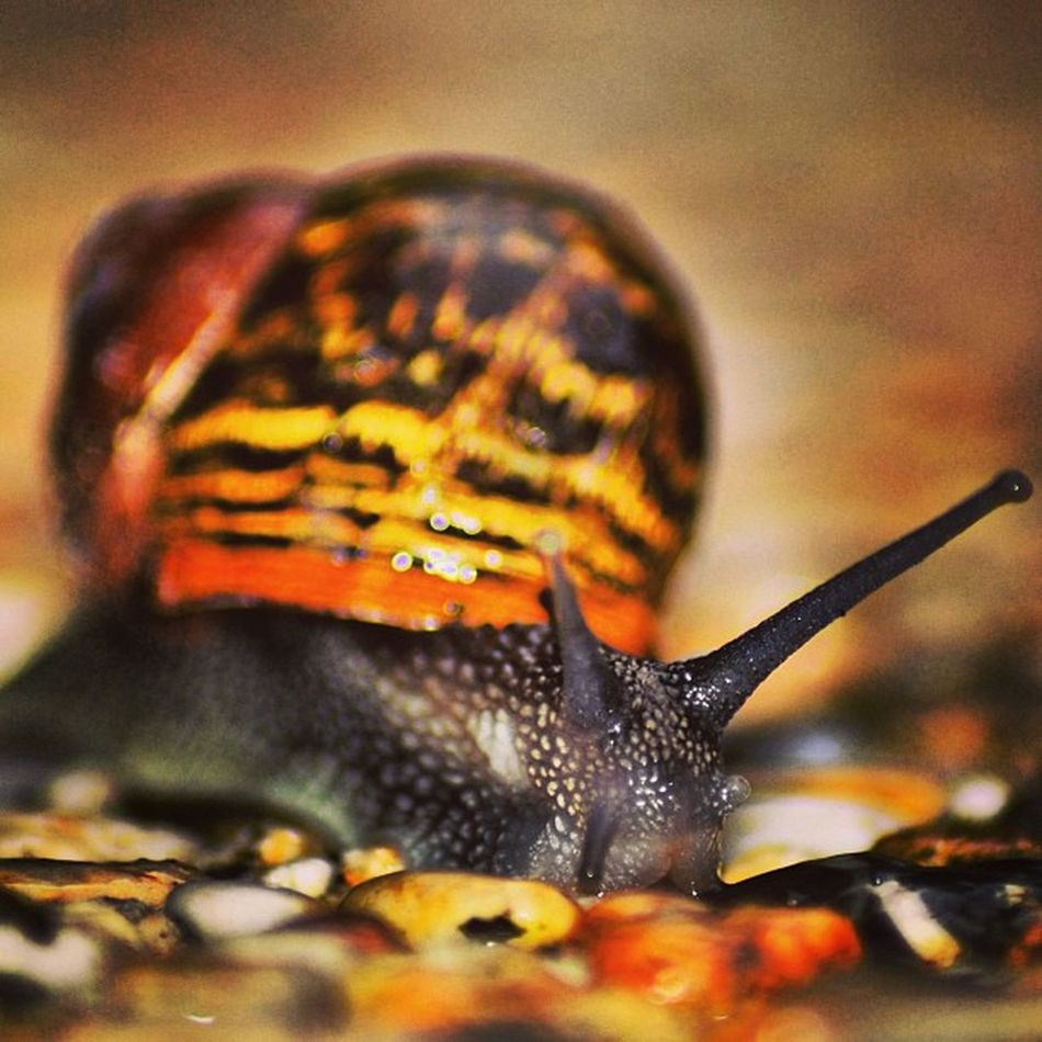 Slak Snail Bug Bugs insect insects creepy nature animal life creature animalsofinstagram instanature macro animals animali insecto error small legs wings cool lovebugs beautiful lovebugs tagstagramers tagsta tagsta_nature