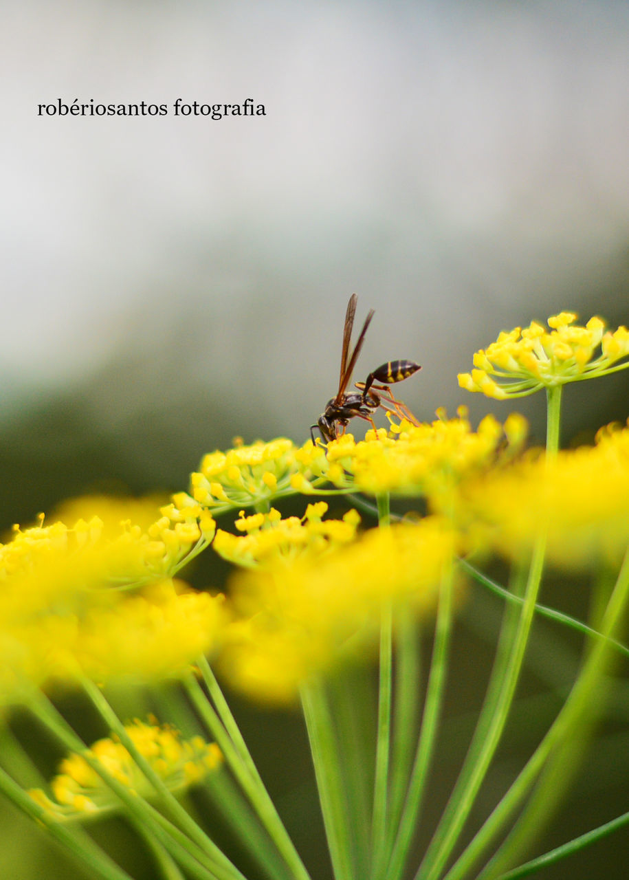 animal themes, one animal, flower, insect, animals in the wild, nature, plant, growth, animal wildlife, beauty in nature, yellow, fragility, selective focus, outdoors, no people, day, petal, close-up, green color, flower head, freshness, perching