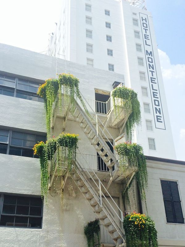 Architecture Building Exterior Built Structure City City Life Contrasts Flower Green Color Modern New Orleans No People Outdoors Plants And Flowers