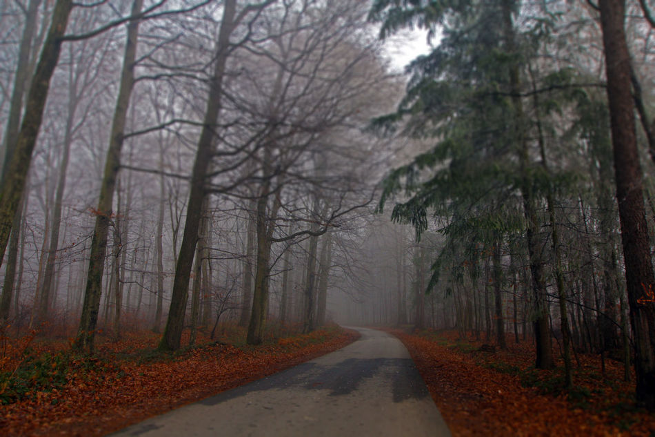 Beauty In Nature Country Road Diminishing Perspective Empty Road Fog Fog In The Trees Forest Forest For The Trees Nature Road The Way Forward Tree Tree Trunk