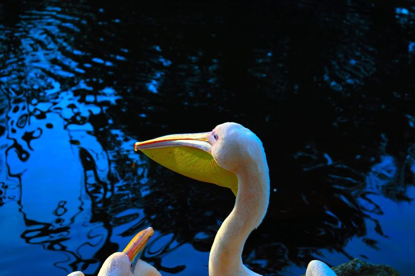 Animal Themes Animals In The Wild Beauty In Nature Close-up Day Floating On Water Nature No People Outdoors Sea Life Swimming Underwater Water