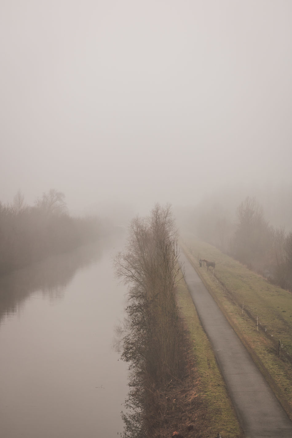 Bare Tree Beauty In Nature Dawn Day Distance Fog Grass Horse Landscape Nature No People Outdoors River Road Scenics Sky Towpath Tranquil Scene Tranquility Tree