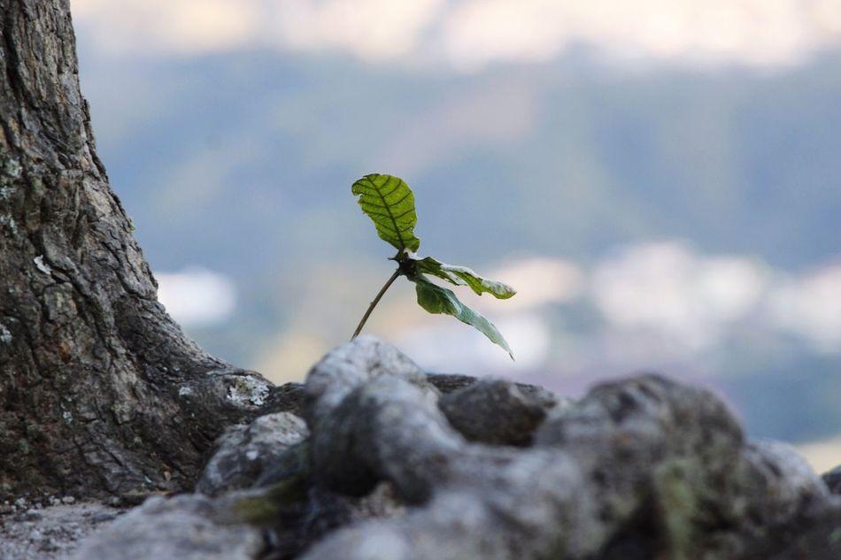 Resist New Life New Life Begins Honduras Nature Leaf Outdoors