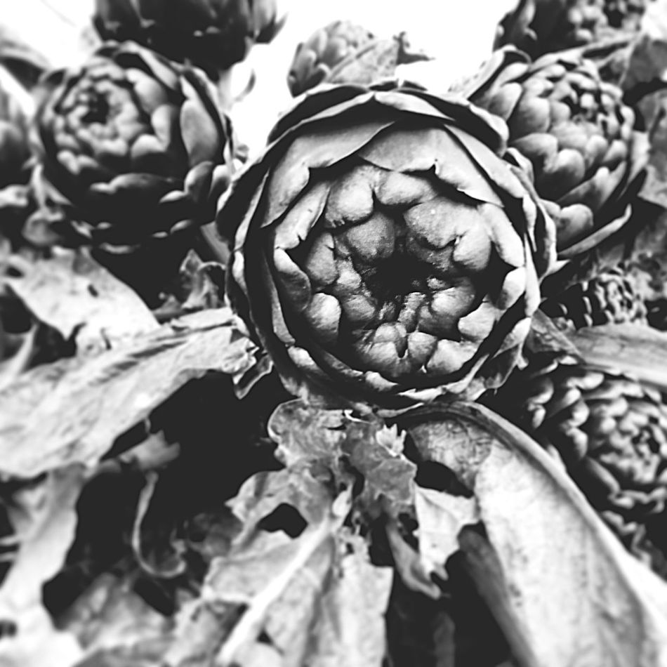 Monochrome Blackandwhite Blsckandwhite Black And White Black & White Blackandwhite Photography Black&white Black And White Photography Black Background Vegetable Healthy Eating Growth Close-up Nature No People Food And Drink Day Outdoors Freshness Food Artichoke Flower Head Rome Italy Italia