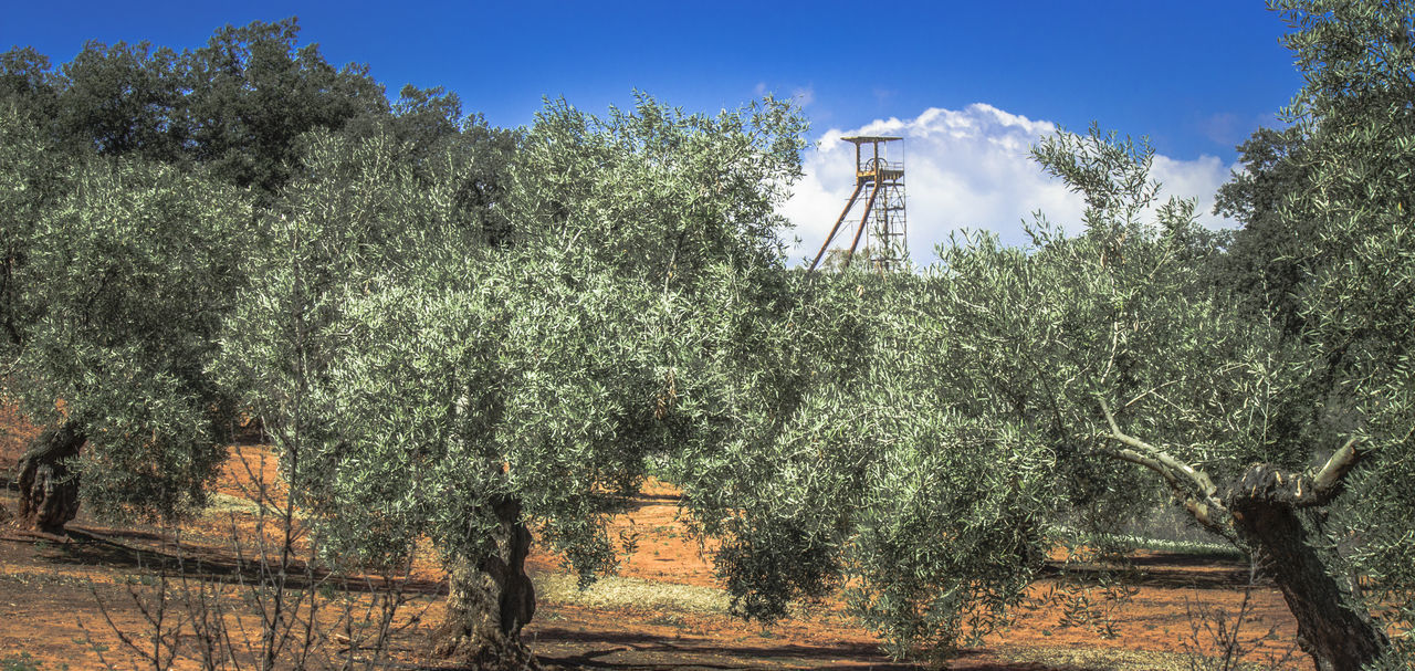 Arquitectura Industrial Clear Sky Day Environment Growth Low Angle View Minas De Linares Minería Minería De Linares Mining Mining Heritage Mining Town Nature No People Outdoors Patrimoine Industriel Patrimonio Cultural Patrimonio Etnológico Sky Technology Tree