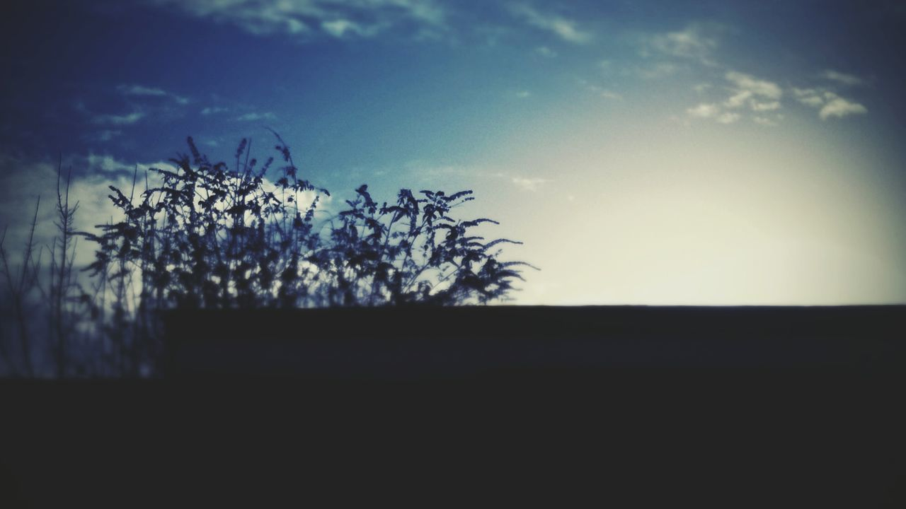 tree, silhouette, nature, sky, plant, growth, landscape, no people, sunset, beauty in nature, outdoors, day