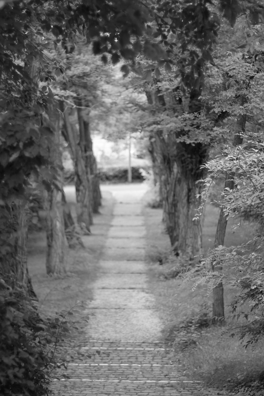 the way forward, tree, nature, day, no people, tranquility, growth, walkway, beauty in nature, outdoors