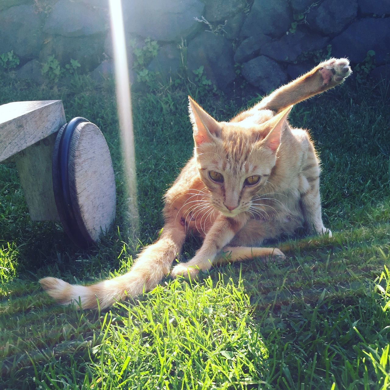 Sommergefühle Domestic Cat Pets Domestic Animals Feline Grass Mammal Animal Themes Day No People One Animal Sunlight Outdoors Portrait