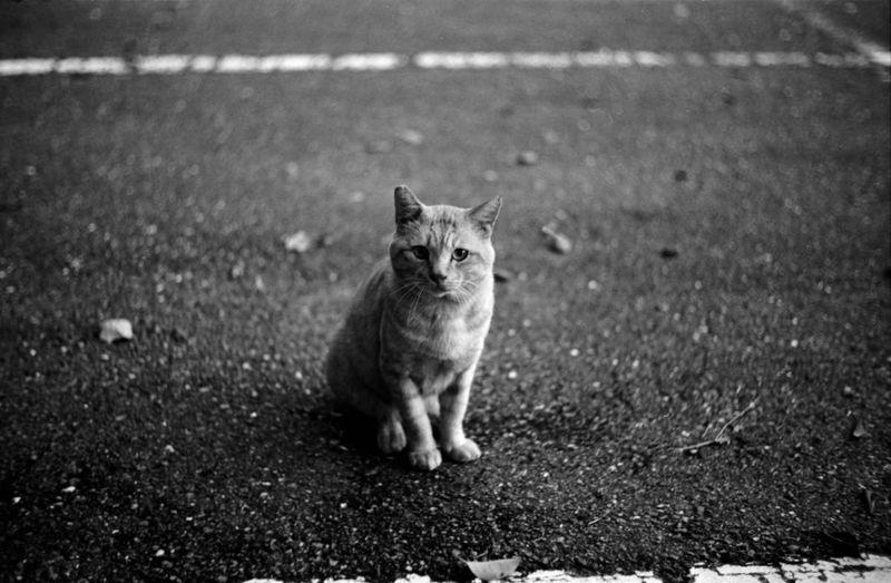 Cat Cat Lovers Cats Of EyeEm Animal Animal Photography Canon 4sb Old Lens Fujifilm Neopan400