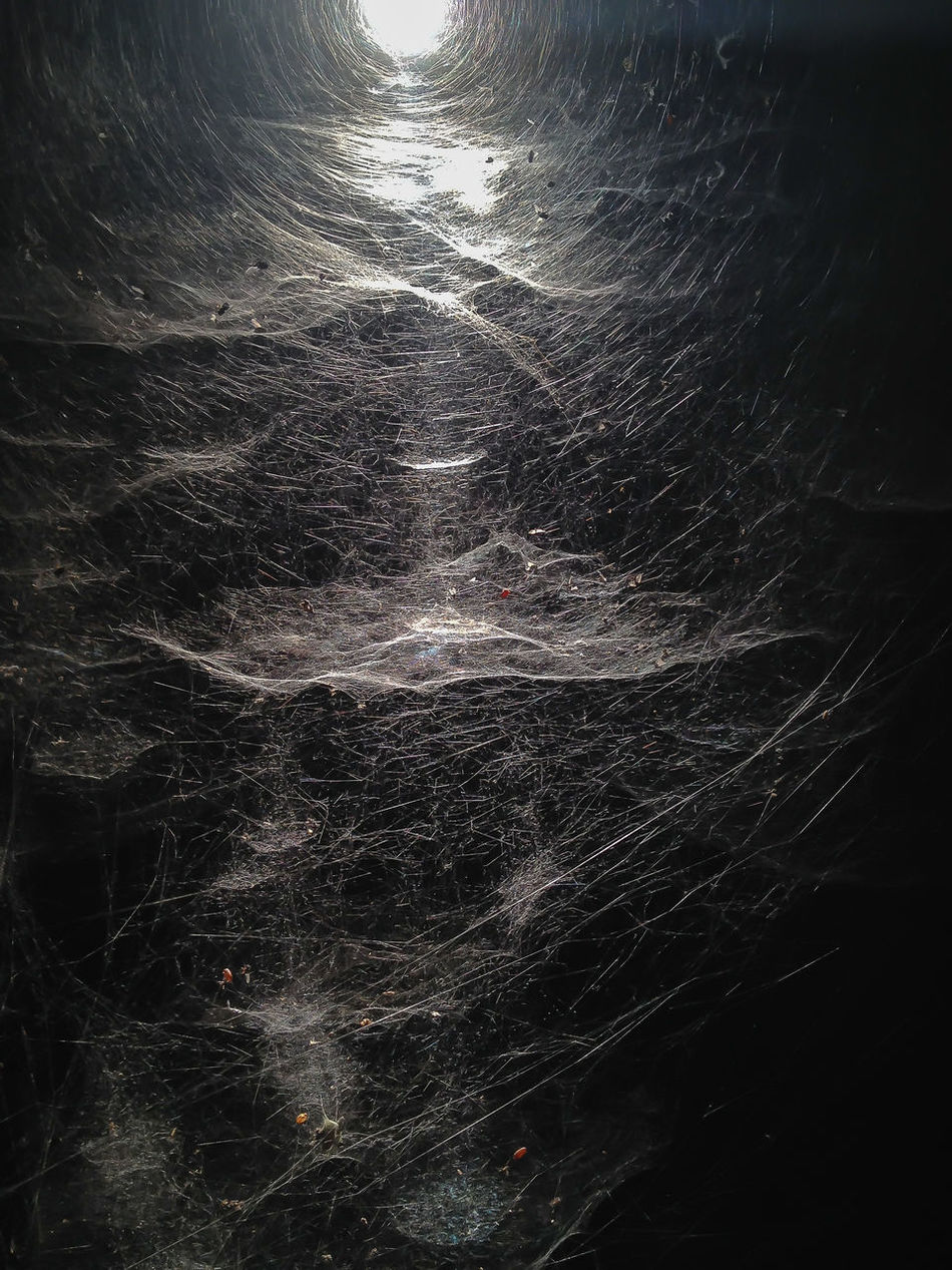 Webs. Spiders. Waaaahhhhh! Architectural Detail Beautiful Cloudy Futuristic Insects Collection Nature No People Spider Spinnenenetz Tap Web Webcity Fine Art Photography