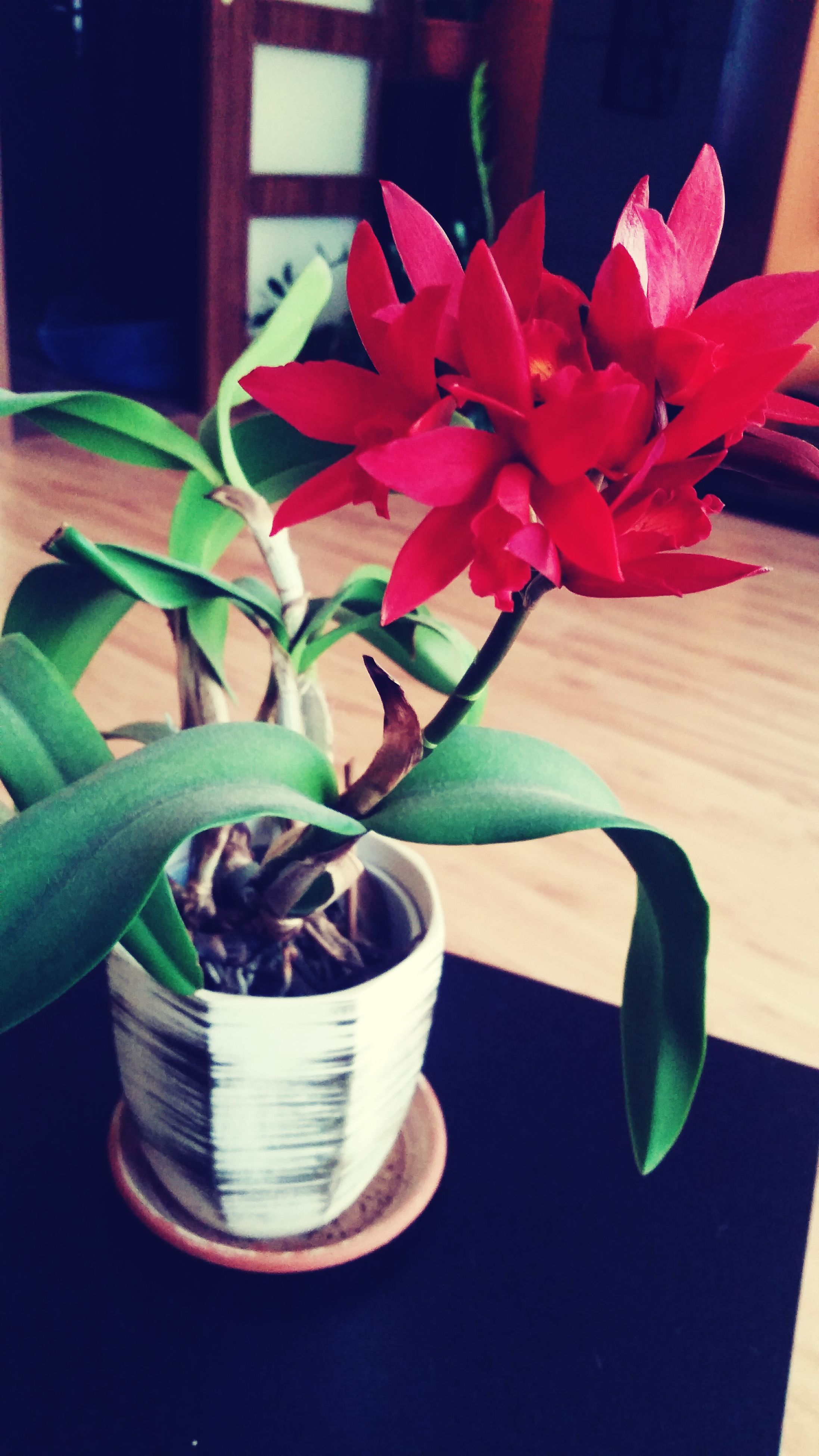 freshness, table, flower, indoors, still life, vase, food and drink, close-up, fragility, wood - material, petal, plant, high angle view, red, no people, growth, potted plant, flower head, home interior, leaf