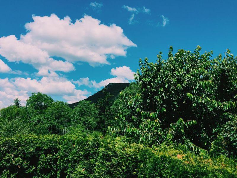 Spring 2015 Mountain