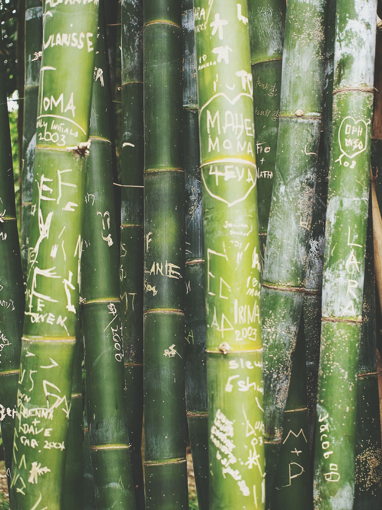 Green Bamboo Bambus Love Lyrics Message Wallpaper Vertical Nature Memories ❤ Memorial Sydney Australia In Love Don't Forget Me