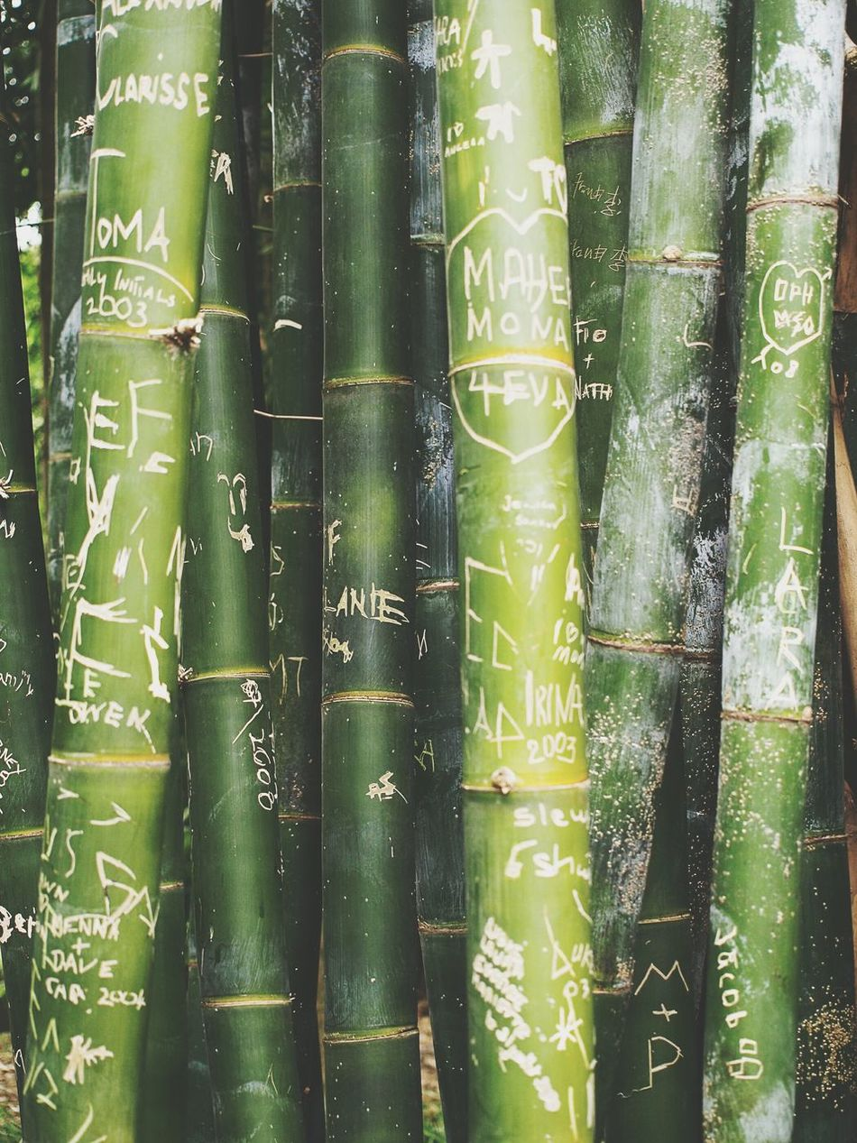 Green Bamboo Bambus Love Lyrics Message Wallpaper Vertical Nature Memories ❤ Memorial Sydney Australia In Love Don't Forget Me