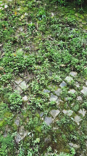 Brick Brick Wall Borneo Sabah Mobilephotography Grass Wild Grasses Green Full Frame Backgrounds Grass Green Color High Angle View Day No People