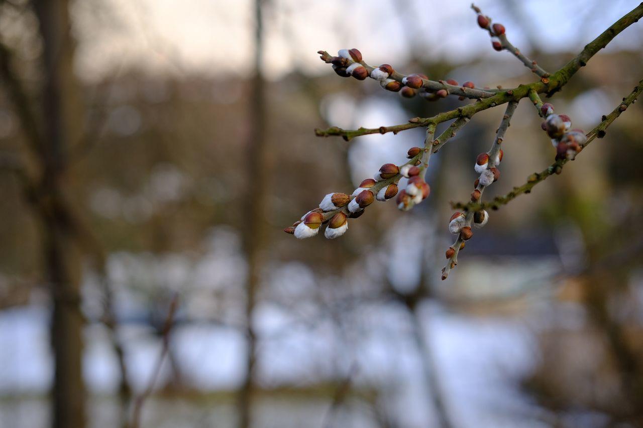 Spring Taking Photos Var Spring Has Arrived Springtime Enjoying Life Sotenäs Sweden Eyeemphotography EyeEm Nature Lover Nature Svensk Natur Fujifilm_xseries Fujifilm Xpro2 Eyeem Sweden Showcase March Xf35mmf2 Hi! Foto