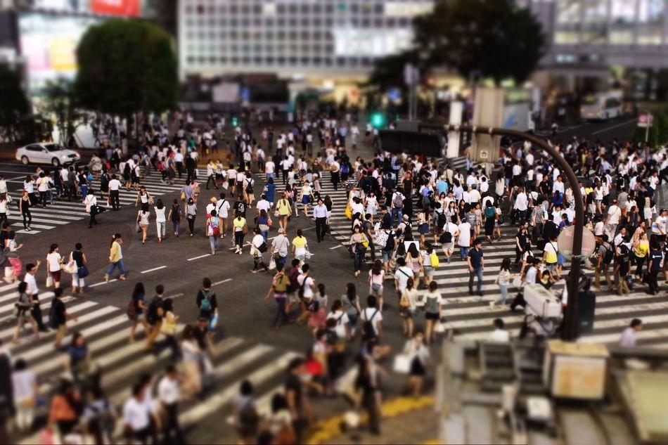 Beautiful stock photos of community, Adult, City, Crossing, Crosswalk