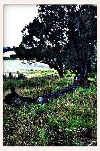 Semi-rural Landscape EyeEm Nature Lover Don't Be Square