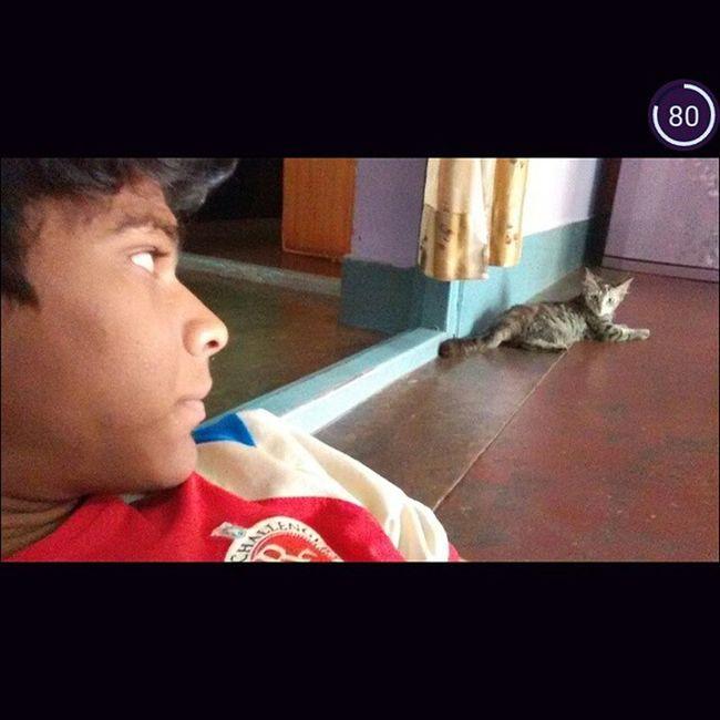 Rcb Cat Catlove Royalchallengersbanglore