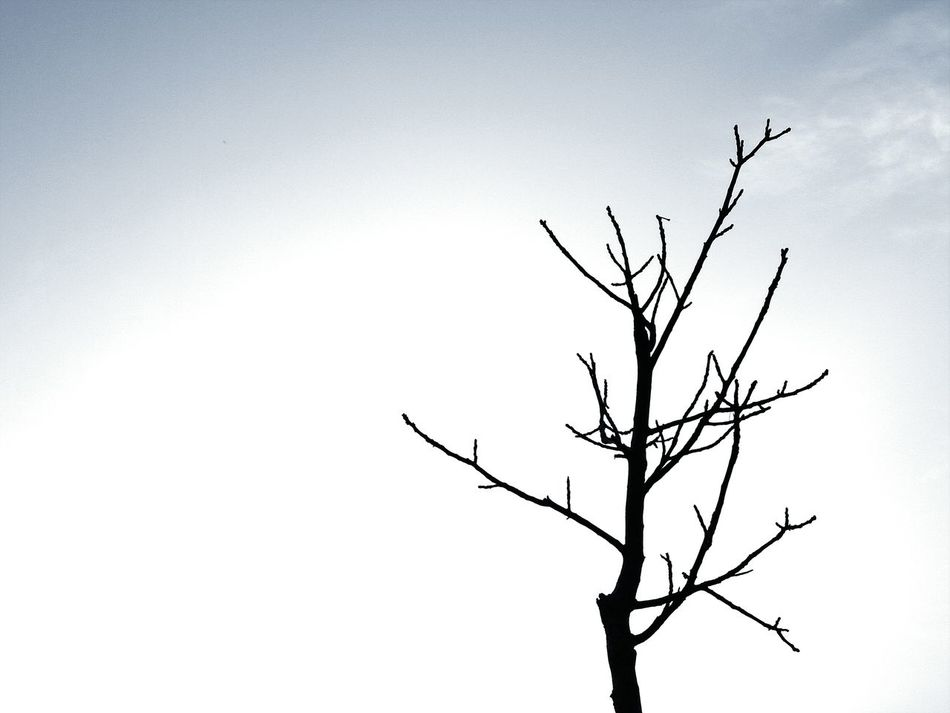 Alone Time 2016 Picture Healer Beauty In Nature Phone PhotographyNo Bird In Sight Light Up Your Life day Bare Tree Outdoors Cloud - Sky Nature No People Tree Sky PhonePhotography Eye Enjoying Life EyeEm Nature Lover Eye4photography