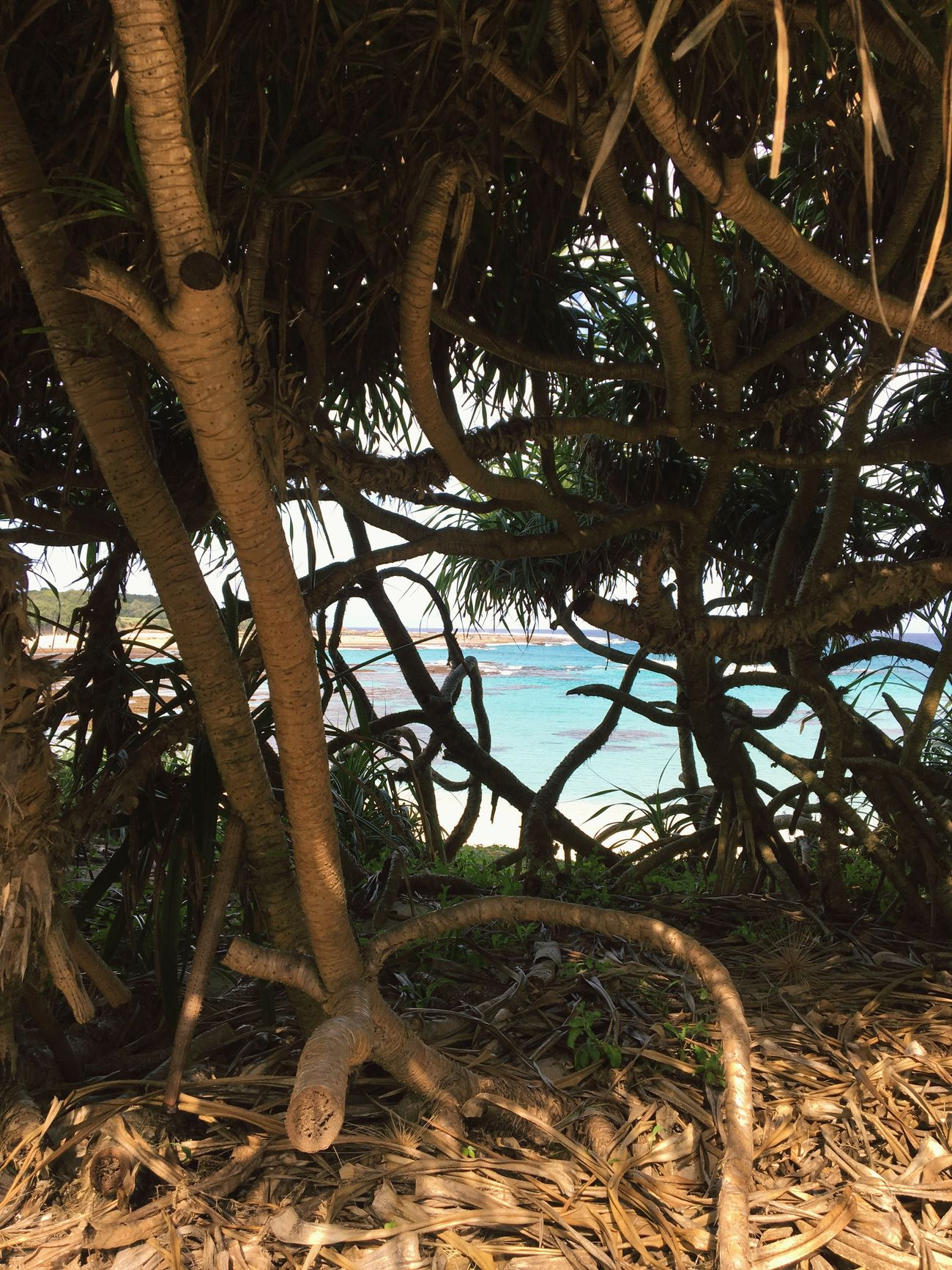 Nature Sea Tree Beach Beauty In Nature Palm Tree
