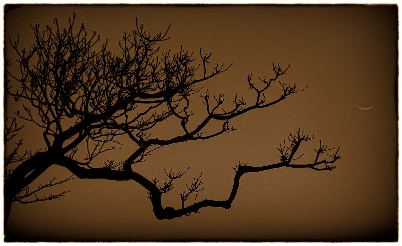Bare Tree Beauty In Nature Black And White Collection  Blackandwhite Blackandwhite Photography Branch Crecent Moon Nature Silhouette Sunset Tree