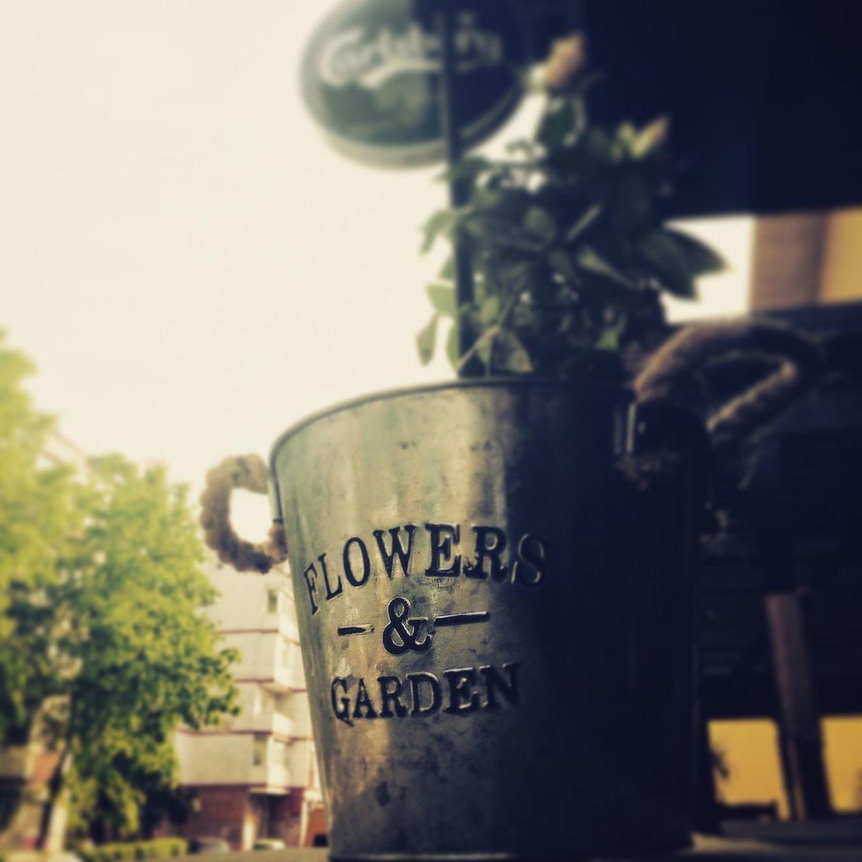 Flowergarden Saturdaymood Sunlight Flowerspot