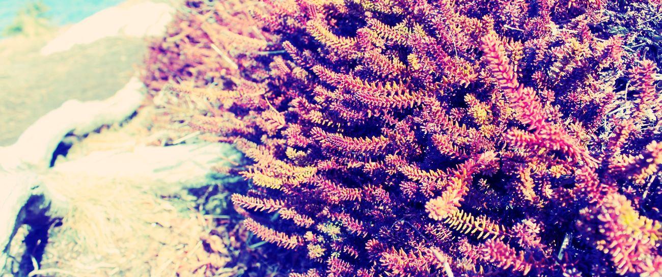 Nature Plants Ocean Beach Grass