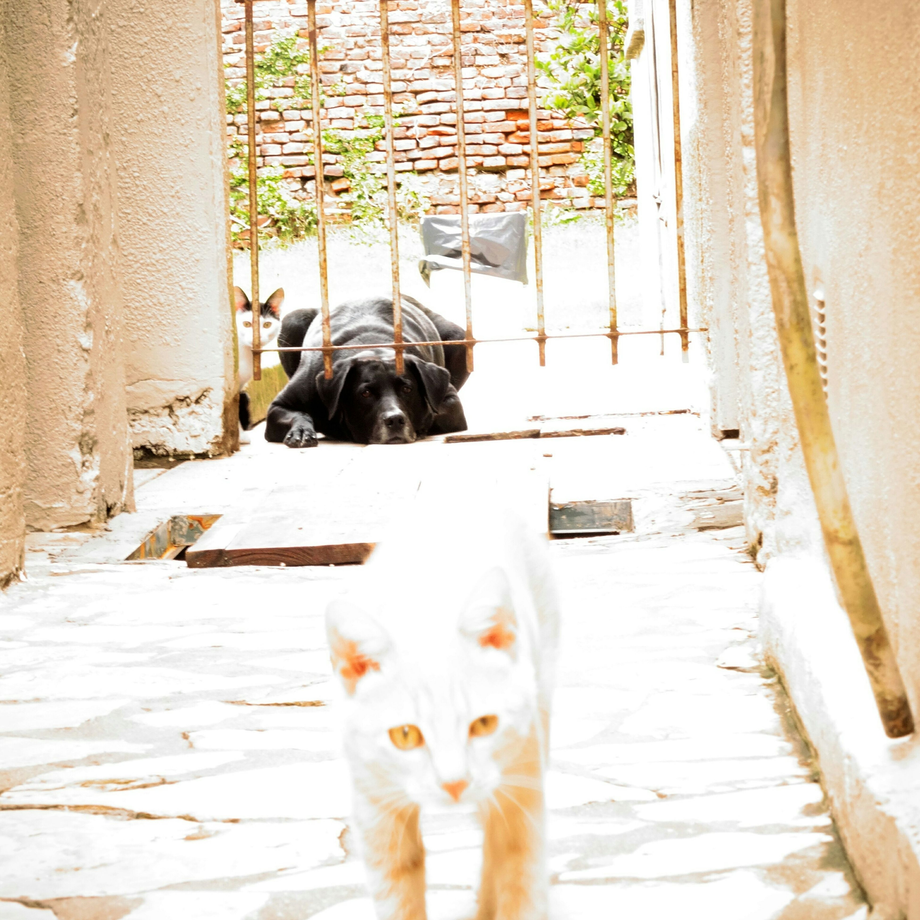 domestic animals, mammal, pets, animal themes, one animal, dog, domestic cat, cat, portrait, looking at camera, architecture, feline, built structure, full length, building exterior, standing, one person, house, sitting, day