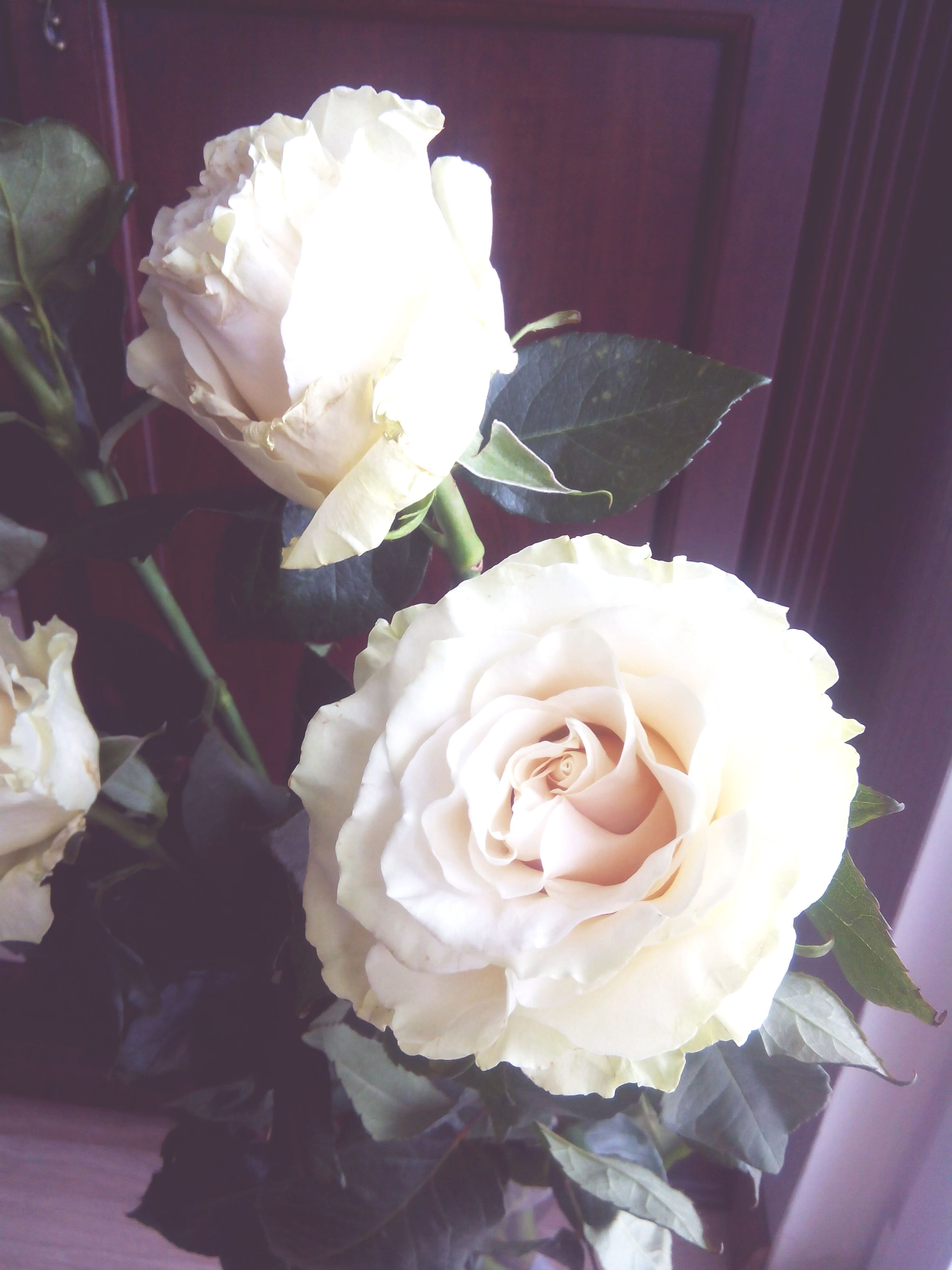 flower, rose - flower, petal, freshness, flower head, fragility, indoors, rose, beauty in nature, white color, close-up, vase, bouquet, pink color, blooming, nature, high angle view, no people, decoration, bunch of flowers