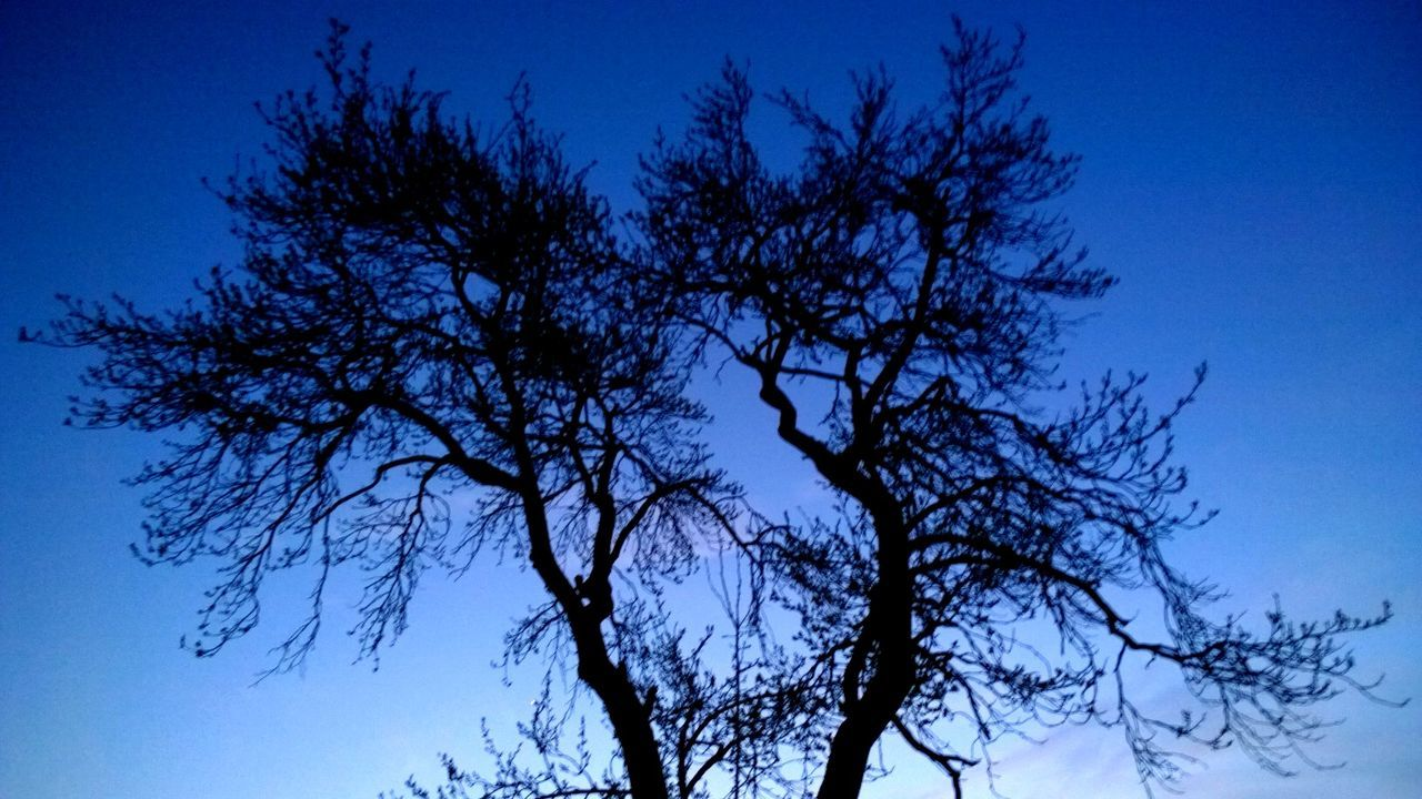 blue, tree, low angle view, nature, clear sky, branch, beauty in nature, no people, sky, outdoors, tranquility, day, bare tree, scenics, growth, blue sky