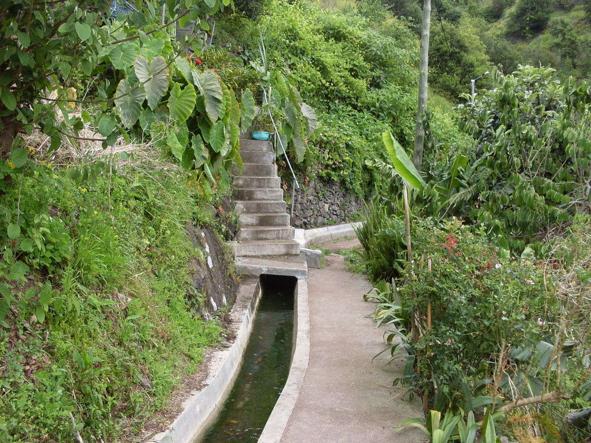 Channel Day Footbridge Forest Green Color Growth Nature No People Outdoors Plant Tree Water Water Way